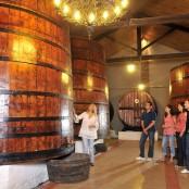 Escapada entre viñedos.Imagen del Archivo de la Comarca del Somontano. Autor Foto Salas