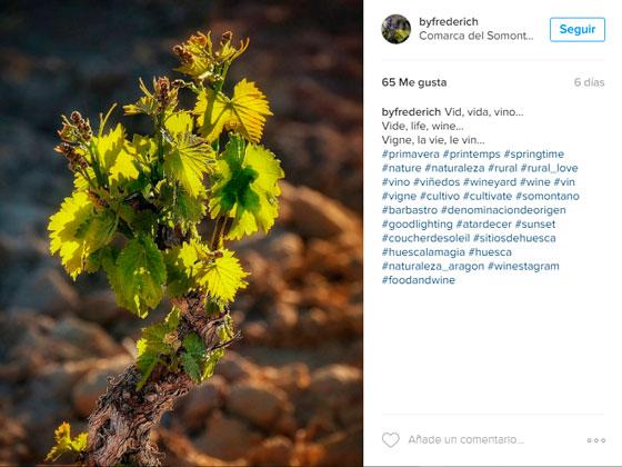 Viñedos del Somontano en Instagram